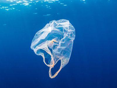 Dia Internacional Sem Sacolas Plásticas