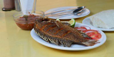 gosto de barro em peixes