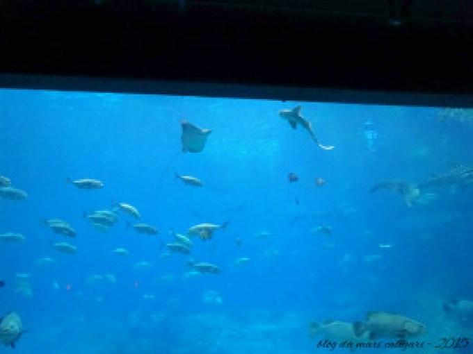 blog aquario atlanta 10