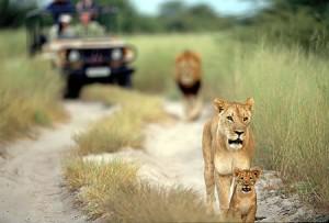 Luna de Miel: Safari en África