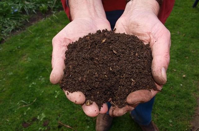 Cum se face compostul – ghid util