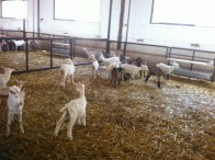 Dairy Khoury 005