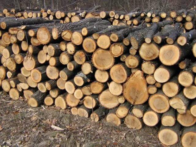 lemne de foc poza blogdeinstalatii