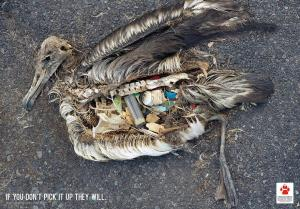Conservación de las Aves: si usted no lo recoge, ellos lo harán