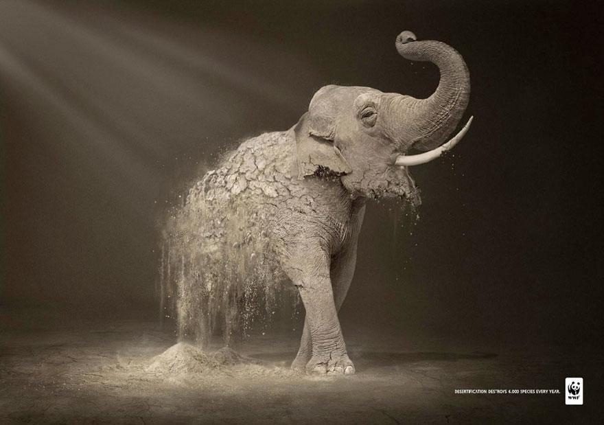 La desertificación destruye 6.000 especies cada año