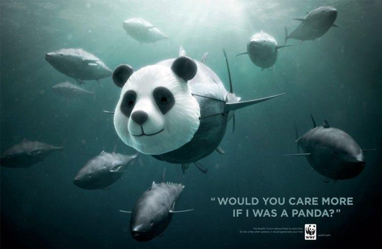 El atún de aleta azul. ¿Te importaría más si yo fuera un panda?