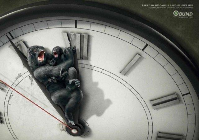 Gorillas tiempo - 1