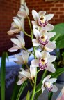 Orquídea no sítio do Brother