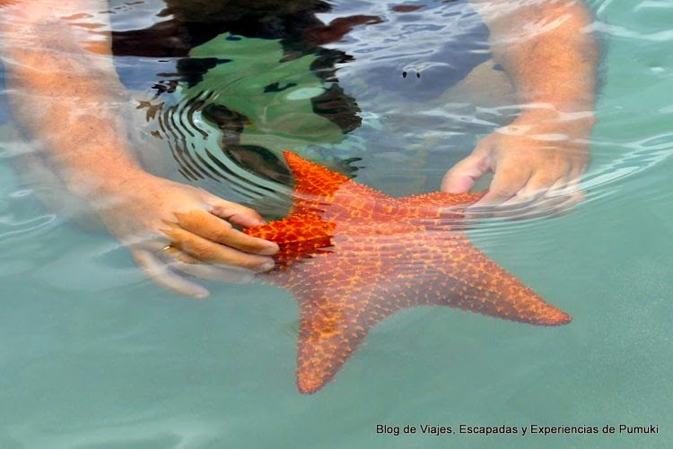 La Playa De Las Estrellas En Bocas Del Toro Blog De Viajes De Pumuki