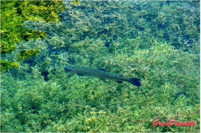 Pesca de truchas en Cuenca