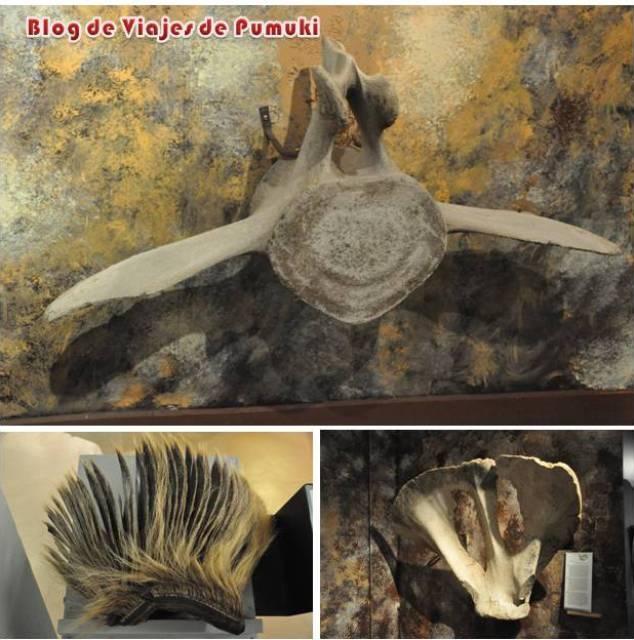 Se pueden observar gran cantidad de huesos de ballena en el museo de las ballenas de Husavik en Islandia. Blog de Viajes por Islandia
