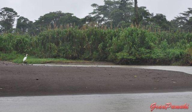 Travesía en barca desde la Pavona hasta Tortuguero por los canales. Se pueden encontrar playas fluviales, garzas y mucha selva. En blog de viajes, Tortuguero, Costa Rica con niños