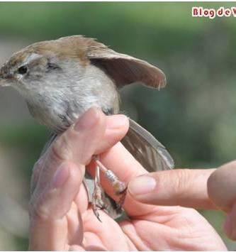 Participa en el Anillamiento Científico de Aves en Madrid