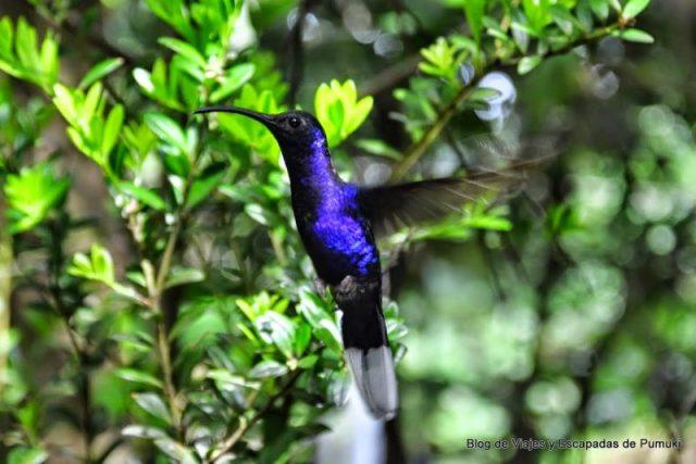 Colibri en Monteverde, Costa Rica