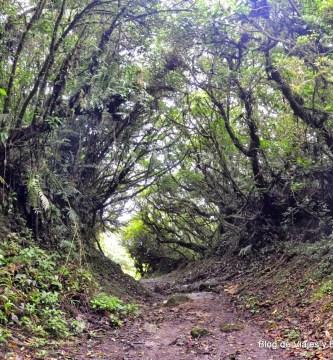 Reserva Biológica de Bosque Nuboso de Monteverde