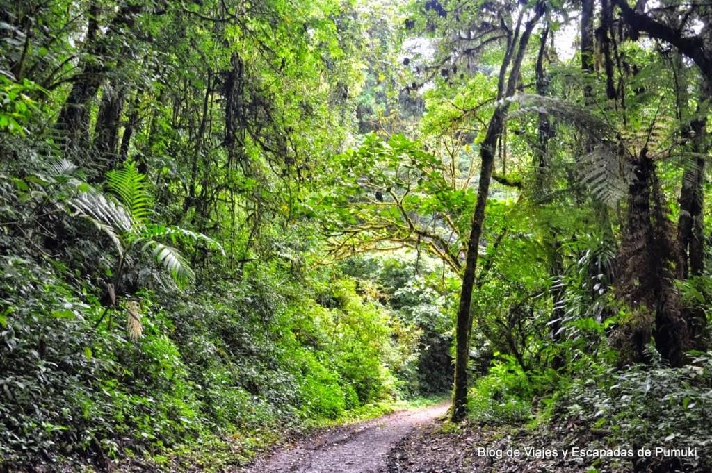 Sendero Camino en Bosque Nuboso de Monteverde
