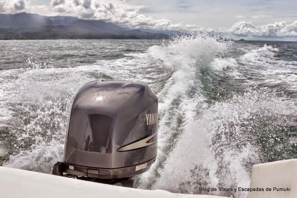 Barca a motor en busca de las ballenas