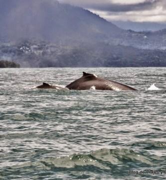 Avistamiento de ballenas en Parque Nacional Marino Ballena