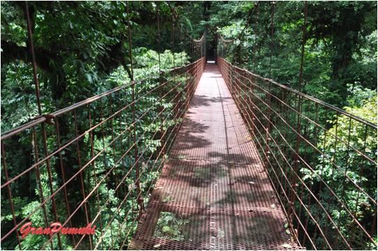 Pasarela en la Reserva Natural del Bosque Nuboso de Monteverde. Léelo en el Blog de Viajes en Familia por Costa Rica.