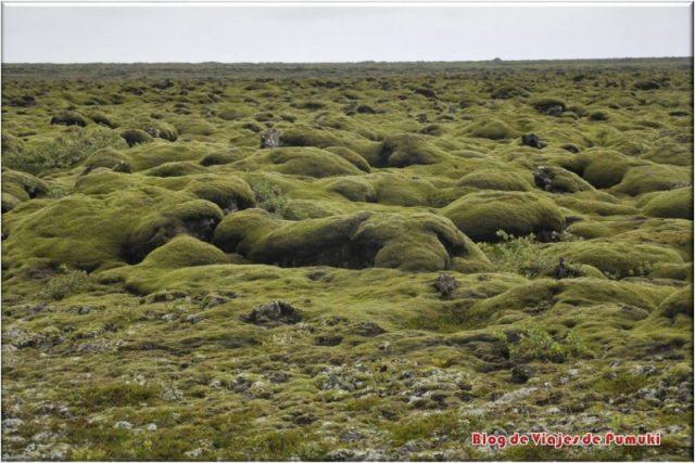 Campos de musgo verde en Islandia