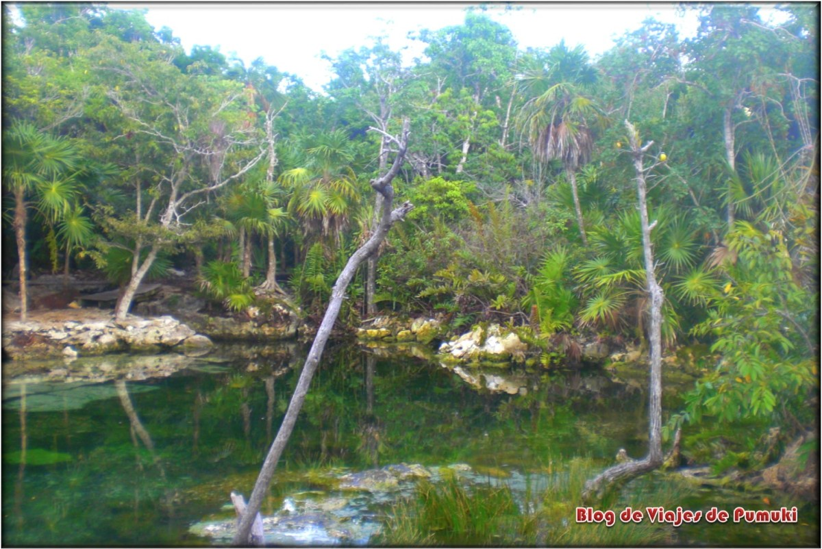 Cenote en la selva de La Riviera Maya