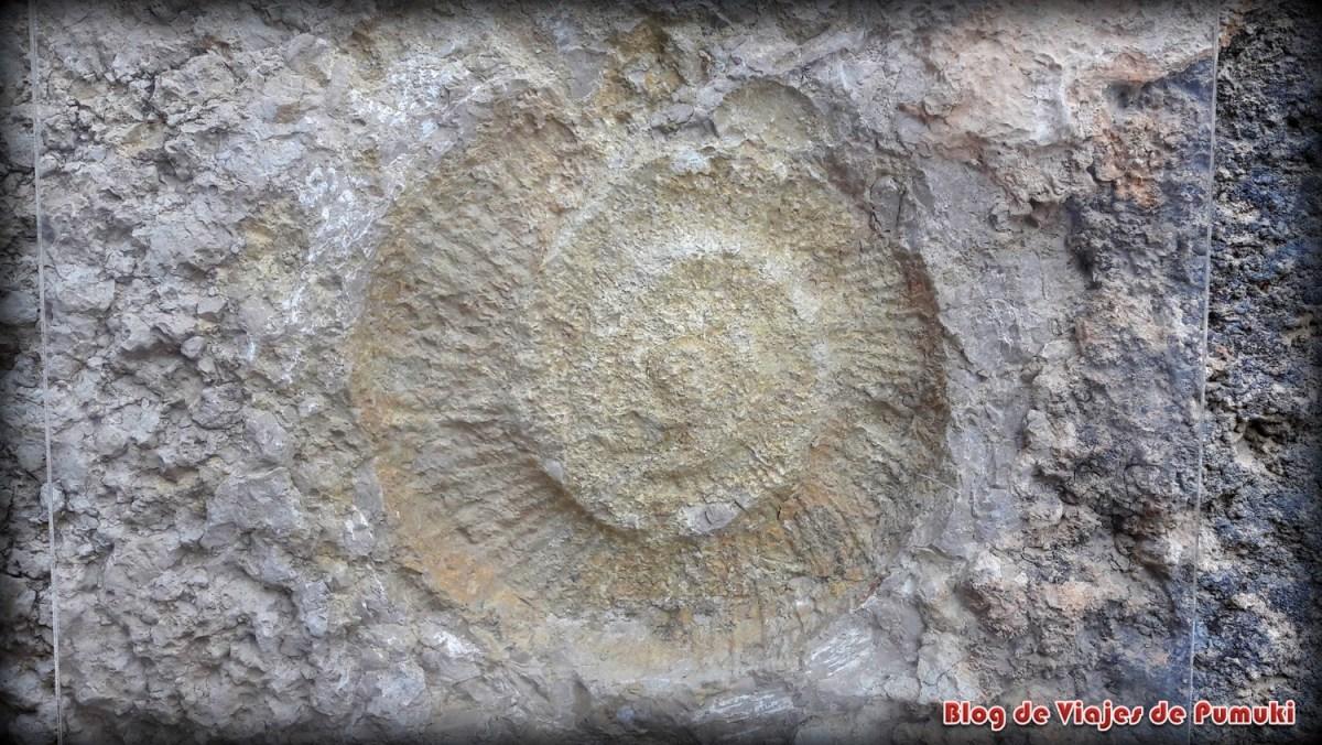 Fósil en el Caminito del Rey