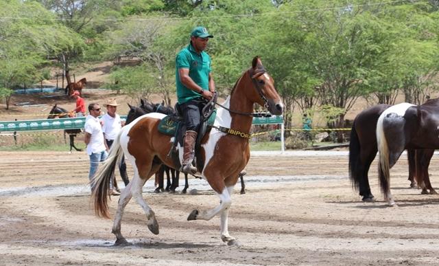 12° edição da Festa do Cavalo será realizada no município de Gravatá, no Agreste