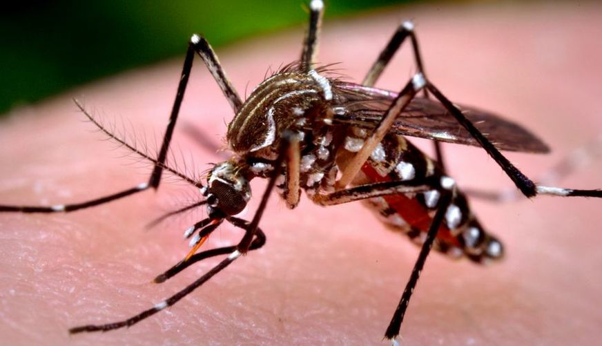 Mesmo em período de estiagem, Aedes Aegypti continua assustando brasileiros
