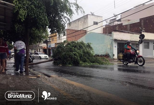 Chuva e vento forte derrubam árvore em Santa Cruz do Capibaribe