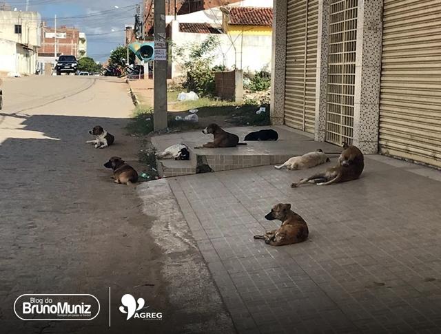 Superpopulação – Aumento de cães e gatos em vias públicas de Santa Cruz do Capibaribe preocupa