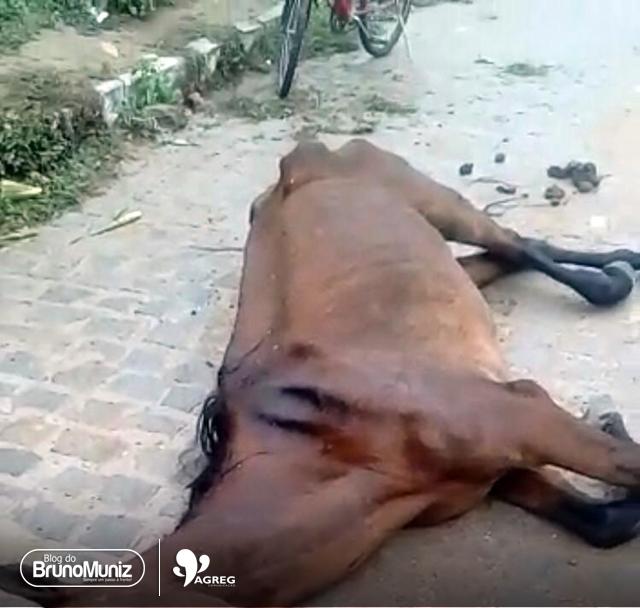 Morte de mais um cavalo por falta de cuidados é registrada em Santa Cruz do Capibaribe