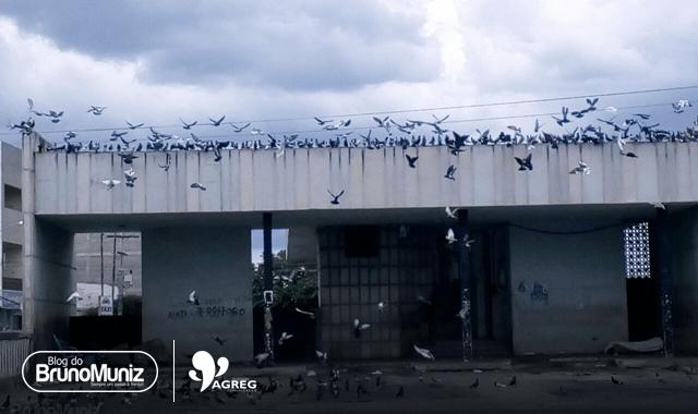 Mortes por doença do pombo acendem alerta para superpopulação da ave