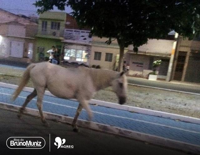 Recorrente – Animais de grande porte circulam livremente nas principais vias de Santa Cruz do Capibaribe
