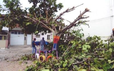 """""""Vamos tomar as providências"""", diz Gerência de Meio Ambiente de Santa Cruz do Capibaribe sobre poda criminosa de árvore"""