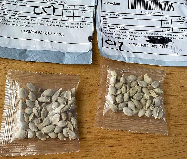 Pernambuco registra terceiro caso do recebimento de sementes misteriosas vindas da Ásia