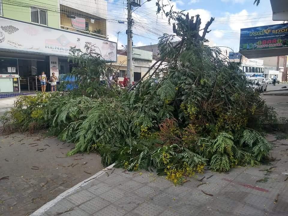 Transbraz esclarece corte de árvore em Santa Cruz do Capibaribe
