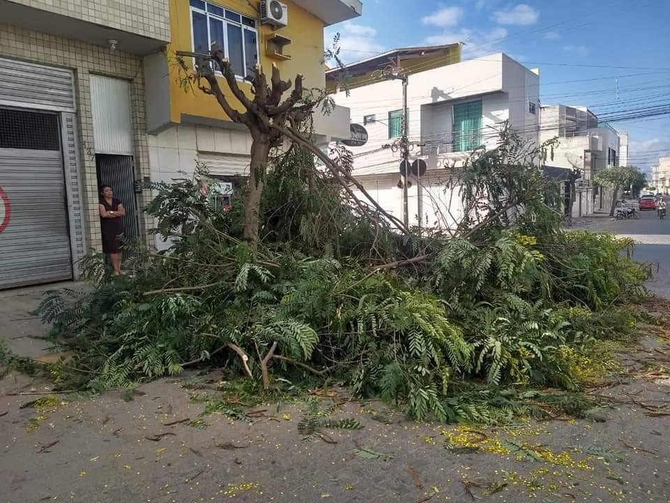 Moradora acusa a empresa Transbraz de cortar árvore de sua calçada sem autorização