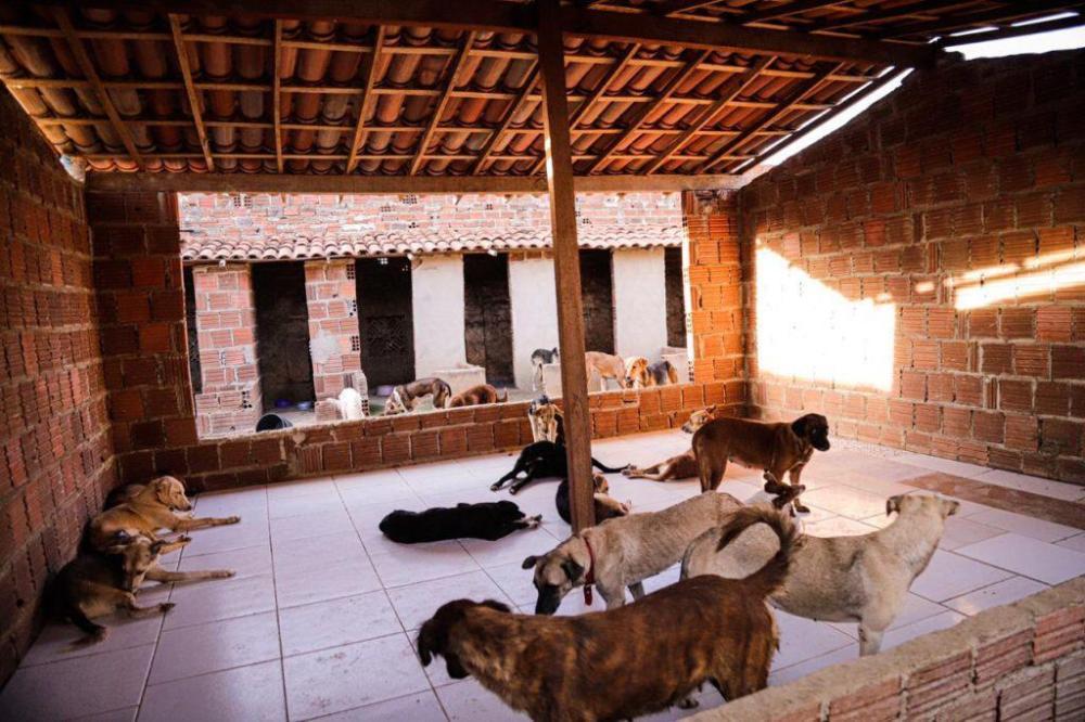 Sede da ONG da vereadora Nega é invadida, e cachorros são soltos