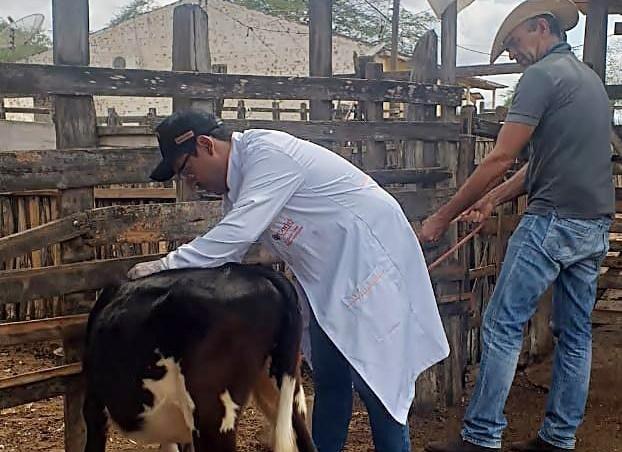 Agricultura inicia vacinação contra brucelose em Santa Cruz