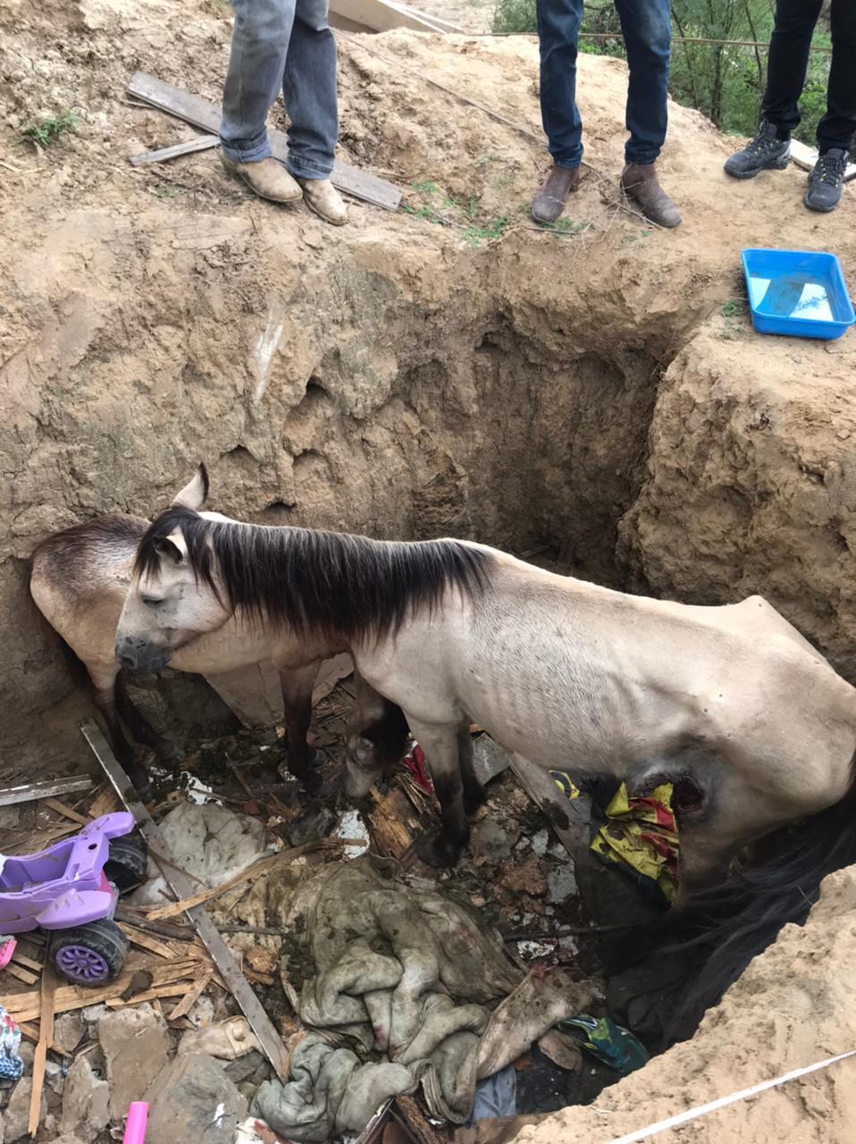 Cavalo cai dentro de buraco e é resgatado em Santa Cruz Do Capibaribe