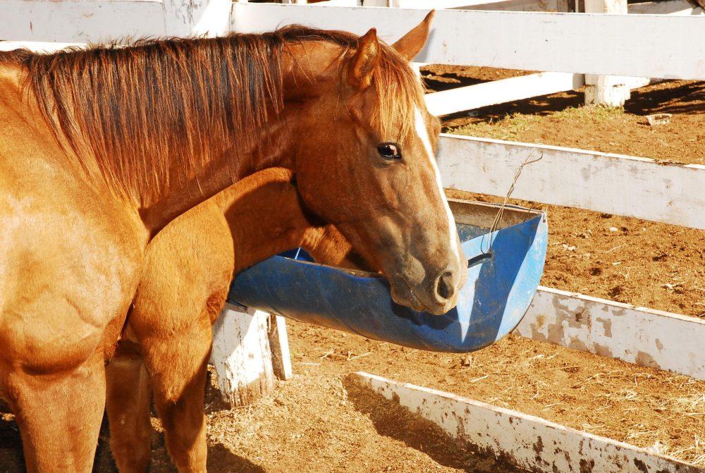 Doença em animais preocupa autoridades em Santa Cruz do Capibaribe