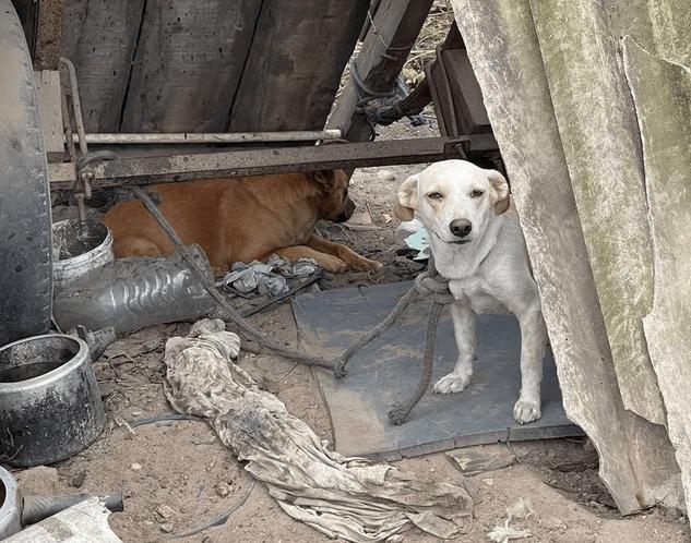 Animais em situação de maus-tratos e freezer com suposta carne de cavalo são encontrados em Caruaru