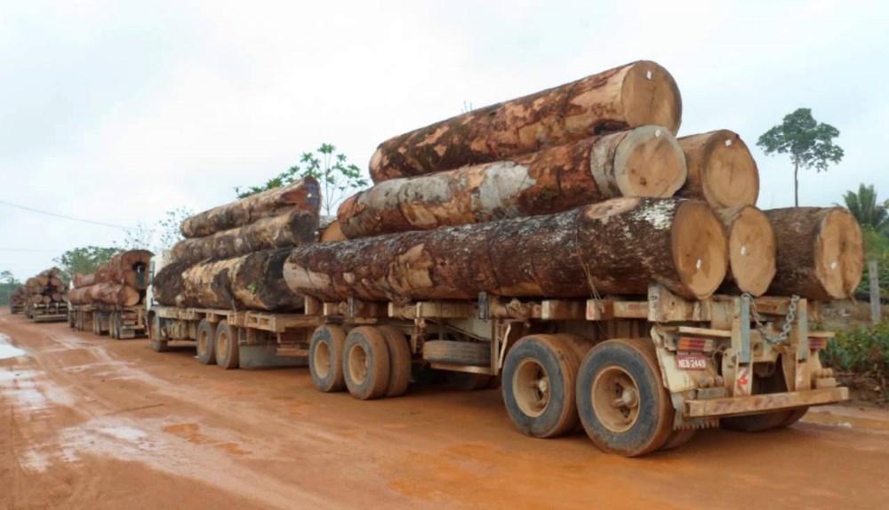 Policiais são presos suspeitos de extorquir caminhoneiros para liberar transporte de madeira ilegal nas rodovias