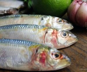 Sobre as sardinhas