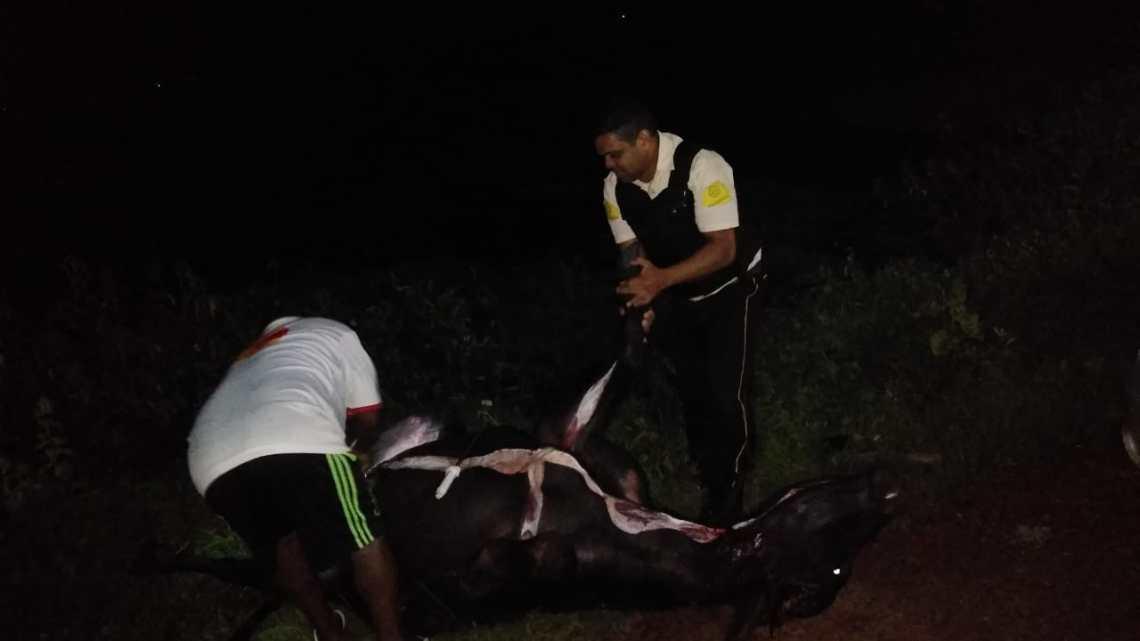 Urgente – Búfalos provocam acidente com carro forte na barragem da justina em Pinheiro