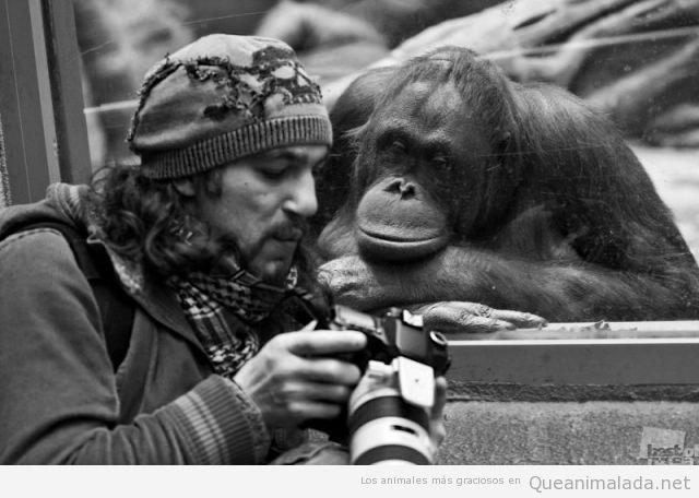 foto-graciosa-mono-mirando-camara-fotos