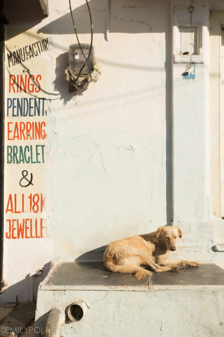 Dog chilling outside of shop on cement block in Udaipur.