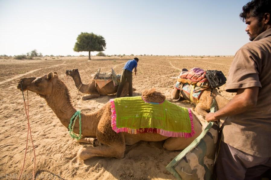Jaisalmer_Camel_Safari_141202-293
