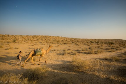 Young Rajasthani boy walking with camel holding it's tail bringing water back to the desert village.