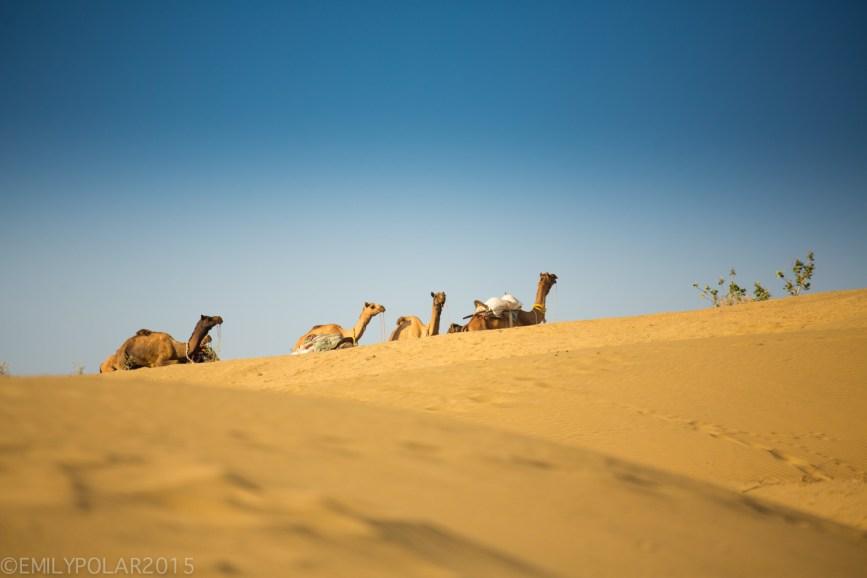 Jaisalmer_Camel_Safari_141203-190